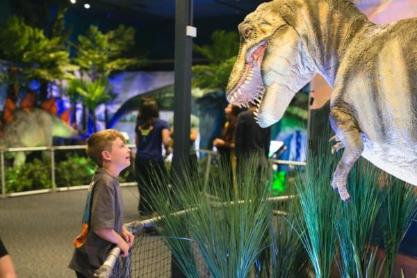 A young boy looks up in awe at a statue of a t-rex dinosaur.