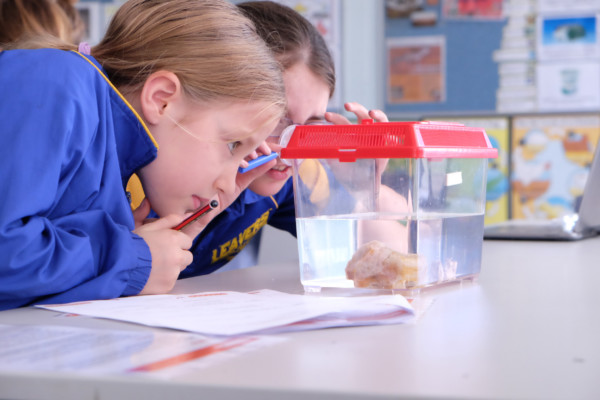 Two young school girls studying at a slimy specimen submerged in a water tank with magnifying glasses.