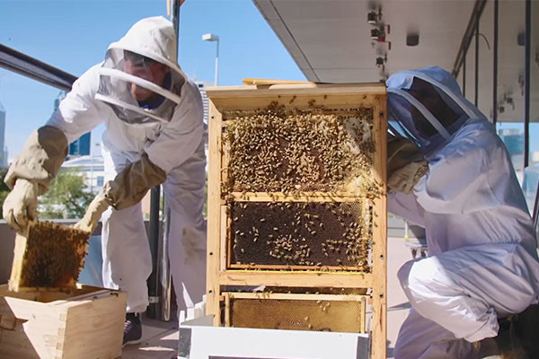 Two people in white bee suits cleaning an indoor hive next to a building.
